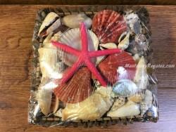 Caja variada de conchas y caracolas - 21 cm.