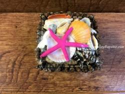 Caja variada de conchas y caracolas - 11 cm.